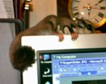 More Marsupials Join the Family – Sugar Glider Tales (or is it Tails?)