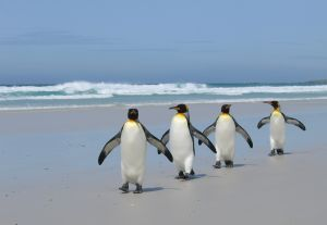 Linux Users All in a Row