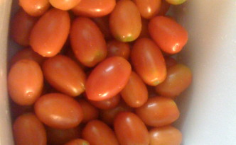 One Sunday harvest from one tomato vine.